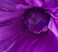 Purple Blossomed Flower by CapeCodGiftShop