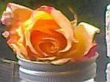 A Real Peach  by Mallardone
