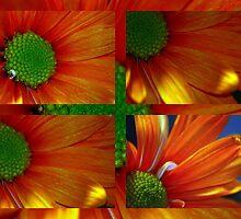 Citrus Collage by artsthrufotos