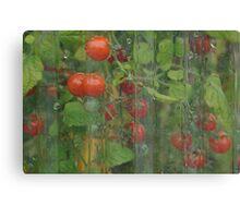 Red & Ripe  Canvas Print