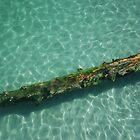 Down to the Sea by Barbara Burkhardt