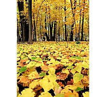 A yellow forest  Photographic Print