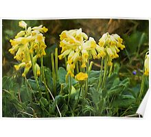 Cowslips with a liquid lines texture Poster