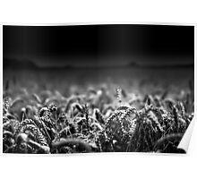 Wheat Close To Me BW Poster