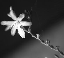 Last Bloom Lasts Forever by Jaymilina