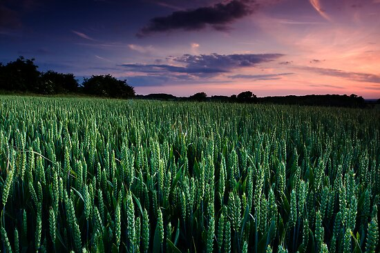 Summer Promise by Andy Freer