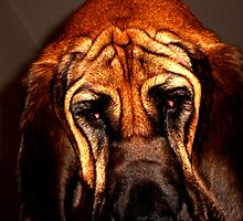 Bloodhound. by JordanK