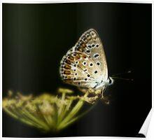 Una farfalla nel bosco Poster
