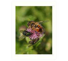 Nectar Shortage Art Print