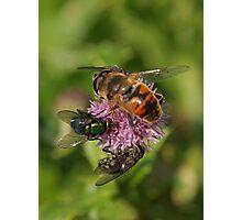 Nectar Shortage Photographic Print