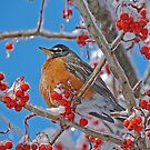 ROBIN IN WINTER by Laura Retyi