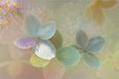 Petals  by Elaine  Manley