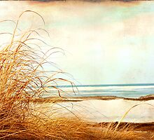 Calm by Tina Smith
