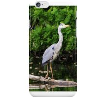 Heron - A Graceful Study. iPhone Case/Skin