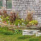 Flower Boat by PhotosByHealy