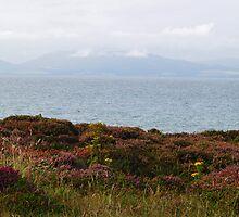 Dornoch Firth by WatscapePhoto