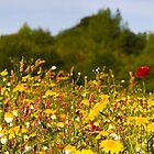 Wildflower panorama by Michael Hadfield