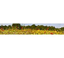 Wildflower panorama Photographic Print
