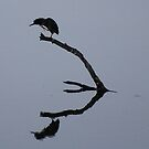 The Silhouette and Reflection by barnsis