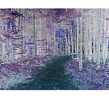 Woodland Trail Photographic Print