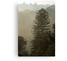 misty morning - fir Canvas Print