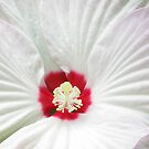hibiscus by Bruce  Dickson