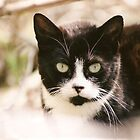 Tuxedo Feral Cat  by Pagani