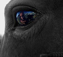 eye of the equine by Lisa Skala