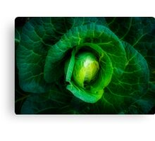 Cabbage with a healthy glow Canvas Print