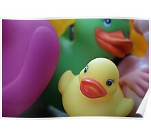 Duck Pile. Poster