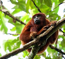 Super Howler Monkey