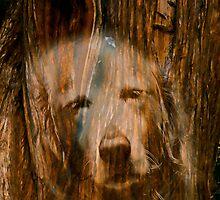Dogwood by Nancy Stafford