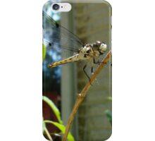 Great Blue Skimmer dragonfly (female) iPhone Case/Skin