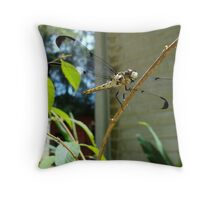 Great Blue Skimmer dragonfly (female) Throw Pillow
