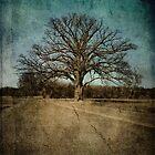 Largest Oak in Missouri by Kristen Coleman