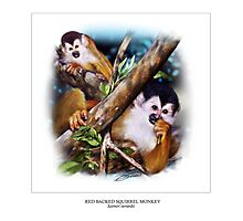 RED-BACKED SQUIRREL MONKEY Photographic Print