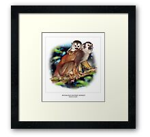 RED-BACKED SQUIRREL MONKEY 4 Framed Print