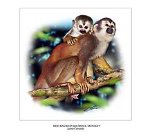 RED-BACKED SQUIRREL MONKEY 4 Photographic Print