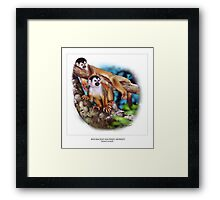 RED-BACKED SQUIRREL MONKEY 6 Framed Print