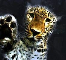 Leopard! by Wayne Gerard Trotman