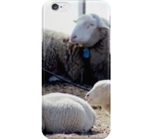 Baby Lambs in the Barn iPhone Case/Skin