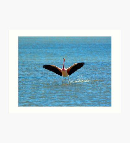 Andean Flamingo lands at Salar de Tara Art Print
