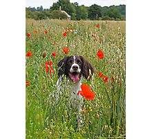 The Colourful Life of a Springer Photographic Print