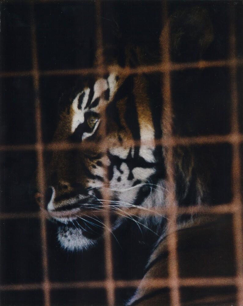 eye of the tiger by doug hunwick