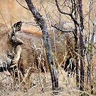 THE WARTHOG – Phacochoerus aethiopicus by Magaret Meintjes