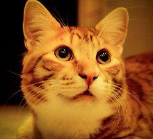 My Ginger by Frank Mezzagosto