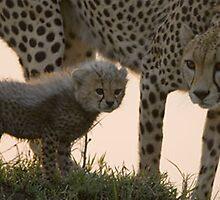 Sparki  - a Cheetah cub by Penny V-P