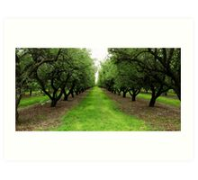 Green Plantation Art Print