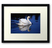 White Swan Framed Print
