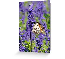 Lavender Butterfly Greeting Card